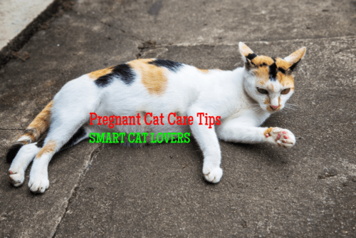 How To Tell If A Feral Cat Is Pregnant