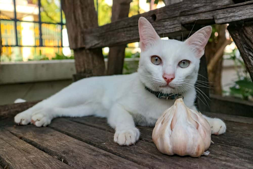 can cats eat garlic