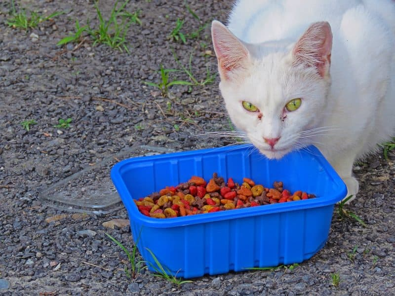 Best Cat Food for Feral Cats