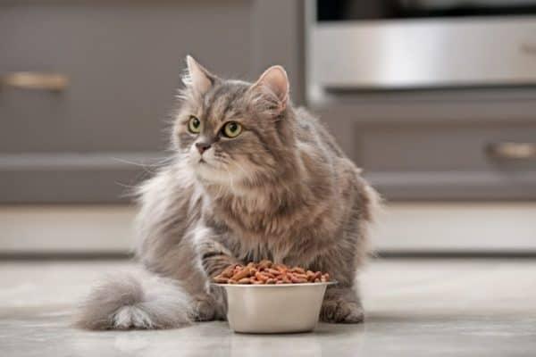 can cats eat cashews