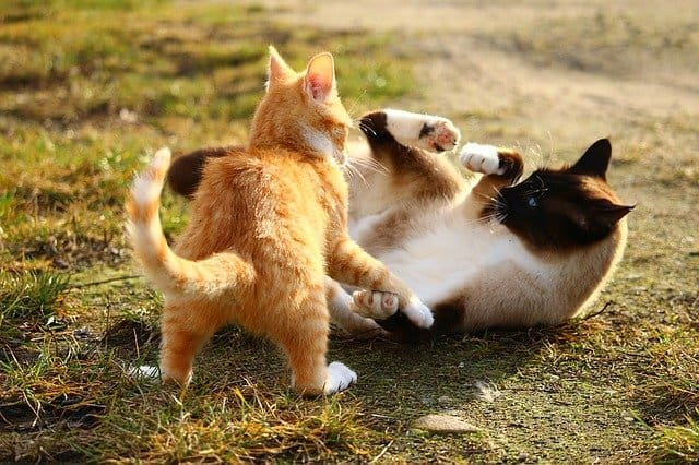 Why Do Cats Groom Each Other And Then Fight
