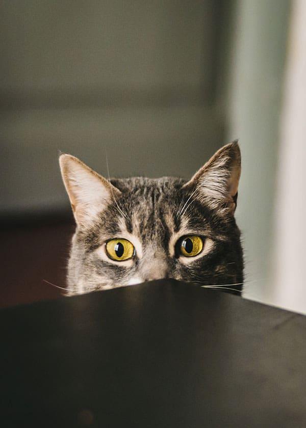 Cat Headbutt
