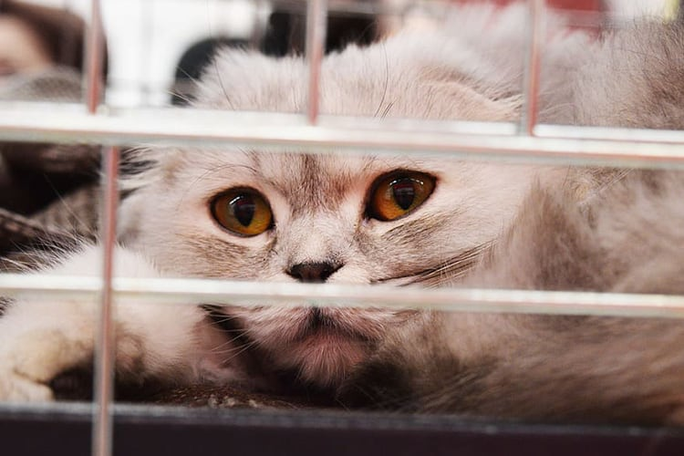 animal-shelter-for-cats