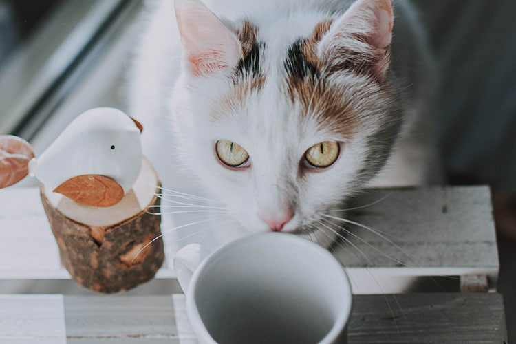 is-milk-bad-for-cats
