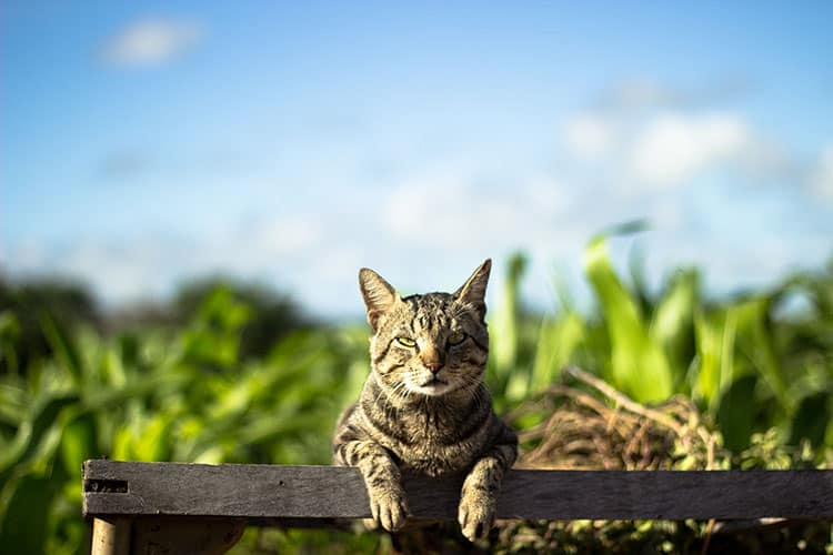 Are Lilies Toxic for Cats