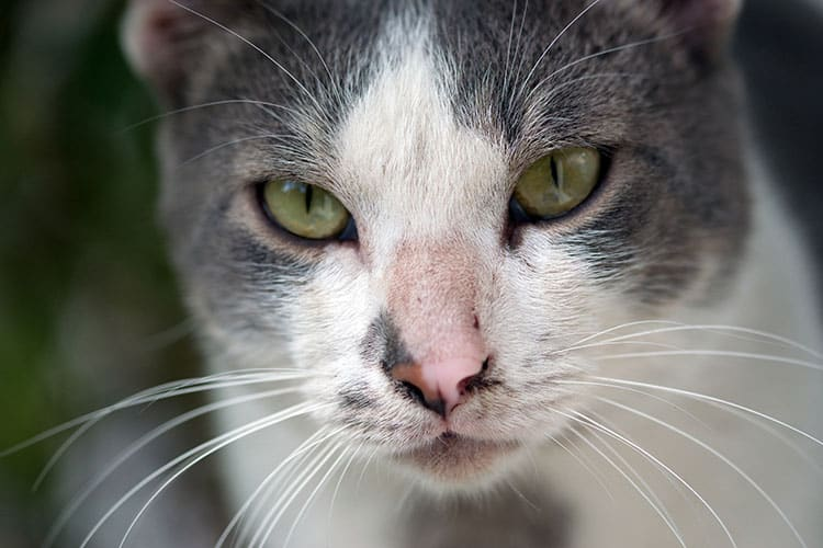 Eye Problems for Cats