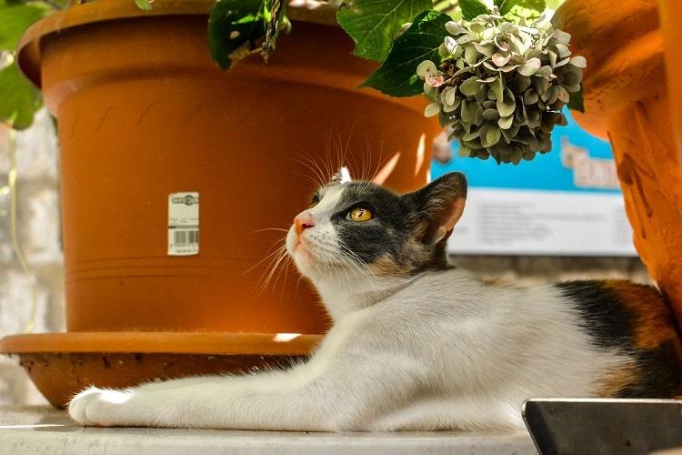 poisonous succulents for cats