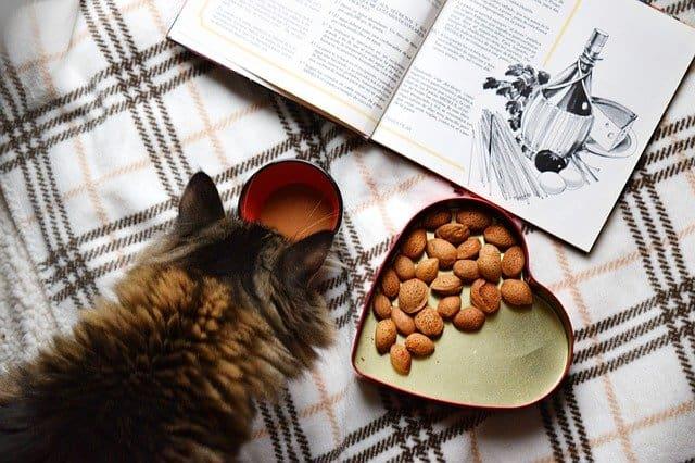 Best Cat Food for Outdoor Cats