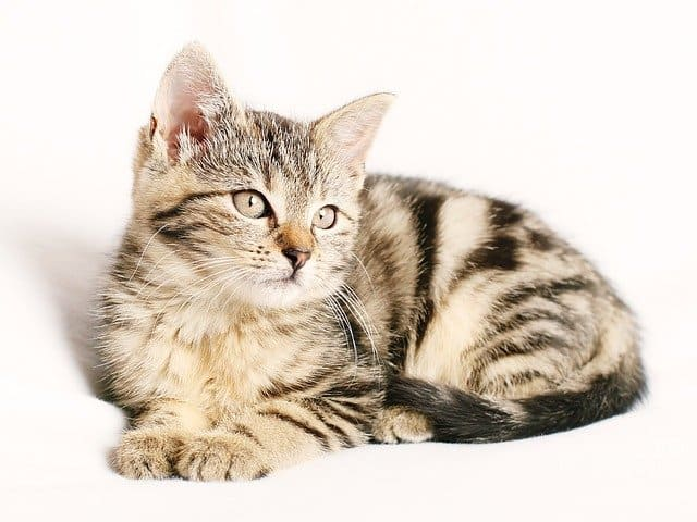 Best Cat Litter Box for Apartment