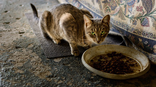 Dry Cat Food Without Chicken