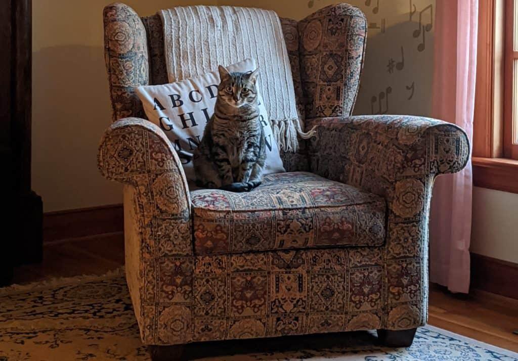 Senior Cat Sitting on Chair