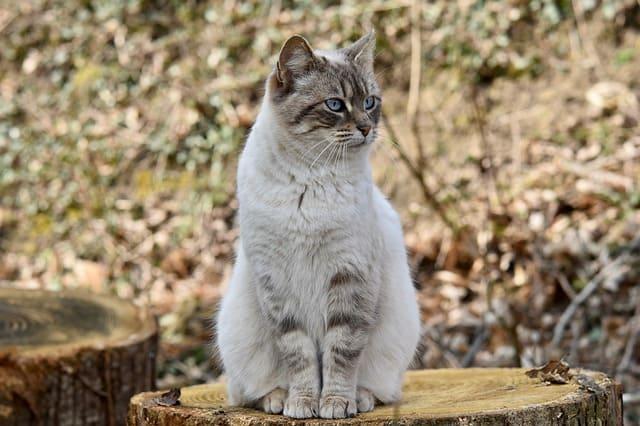 How Much Should A Kitten Weigh At 6 Months