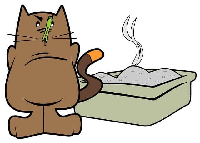 How To Dispose Off Cat Litter the Green Way