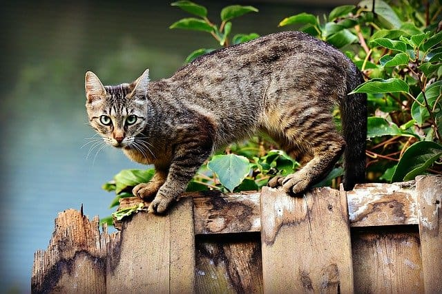 How To Keep Cats Jumping From Fences