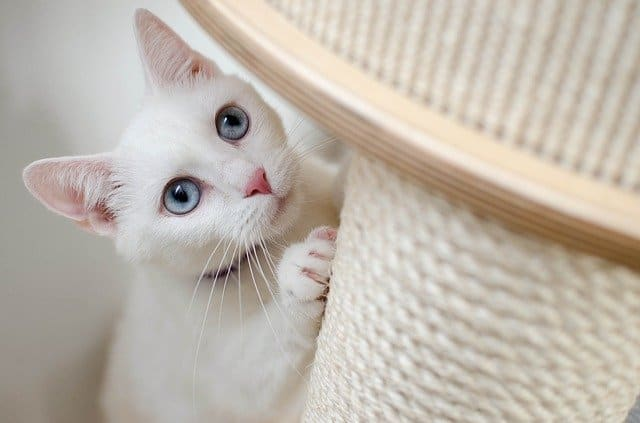 How To Stop Cats From Scratching Leather Furniture