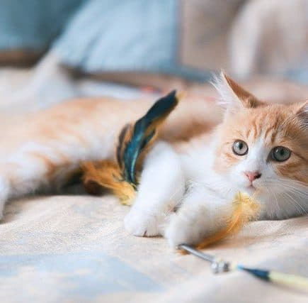 Can Cats Eat Canned Salmon